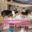 น้ำพุแมว BeaconPet ขนาด 3 ลิตร thumbnail 4