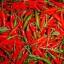 พริกขี้หนู ห้วยสีทน Pepper Seeds / 150 เมล็ด