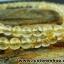 ▽สร้อยคอ ไหมทอง (Rutilated Quartz ) 5 mm.