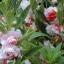 เทียนซ้อน(ซองใหญ่ )สีขาวคลิบส้ม ริบบี้ออเร้นท์ balsam lipbe Orange / 10กรัม thumbnail 2