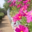 ดาวกระจายสีชมพู #6 / 80 เมล็ด thumbnail 3
