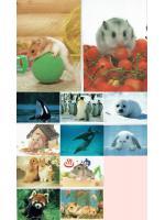 โปสการ์ดรูปสัตว์ จากญี่ปุ่น ๑ ชุด ๑๐ ใบ