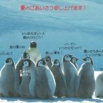 โปสการ์ดรูปนกแพนกวิน จากญี่ปุ่น ใบละ ๑๐ บาท