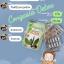 ดีท็อกซ์ คองกาเซีย thumbnail 12