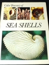 SEA SHELLS : how to identify and collect them . ปกแข็ง พิมพ์ปี 1968