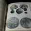 เหรียญกษาปณ์ในประเทศไทย โดย กรมศิลปากร หนา 183 หน้า ปี 2516 thumbnail 16