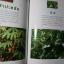 มหัศจรรย์ผัก 108 โดย มูลนิธิโตโยต้า และมหาวิทยาลัยมหิดล พิมพ์ครั้งที่ 8 ปี 2545 หนา 422 หน้า thumbnail 13