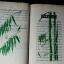 ไผ่เเดง โดย คึกฤทธิ์ ปราโมช ปกแข็ง 367 หน้า ปี 2518 thumbnail 4