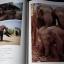 ประเทศไทย 7 วันในราชอาณาจักร (Times Editions) รวมภาพถ่าย ฝีมือ 50 ช่างภาพผู้มีชื่อสำคัญของโลก ปกแข็ง 288 หน้า ปี 1987 thumbnail 11