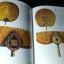 ตาลปัตรพัดยศ ศิลปบนศาสนวัตถุ โดย ณัฎฐภัทร จันทวิช ปกแข็ง 310 หน้า ปี 2538 thumbnail 6