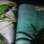 สารพันปัญหาว่าน โดย เชษฐา หนา 90 หน้า ปี 2521 thumbnail 4