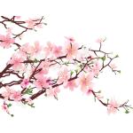 หัวน้ำหอม กลิ่นเชอร์รี่บลอสซั่ม Cherry Blossom ขนาด 1 ออนซ์