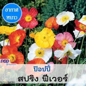 ไม้ประดับแปลง ป๊อปปี้ สปริง ฟีเวอร์ (Spring Fever) 1.09-1.30 บาท/เมล็ด