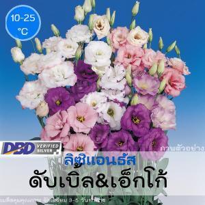 ไม้ตัดดอก ลิซิแอนธัส ดับเบิ้ล&เอ็กโก้ (Double & Echo Series) 1.63-2.14 บาท/เมล็ด