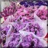 สแตติส คิส (kiss series) Volume pack available 1.29 - 1.4 บาท/เมล็ด