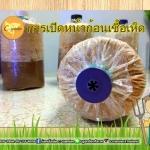 การเปิดดอก ก้อนเชื้อเห็ดนางฟ้าภูฐาน และนางรมฮังการี