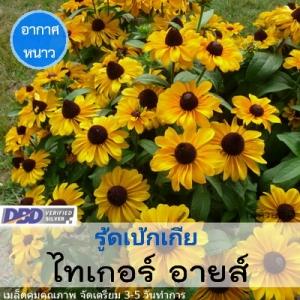 รูดเบ้กเกีย ไทเกอร์ อายส์ (Tiger Eye Gold) 4.49-6.4 บาท/เมล็ด