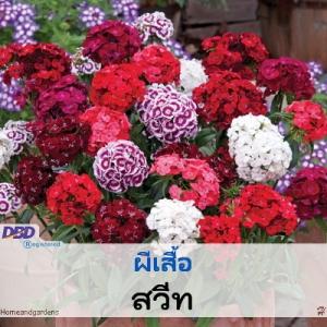 ไม้ตัดดอก ผีเสื้อ สวีท (Sweet Series) 2.39-3.50 บาท/เมล็ด
