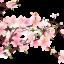 หัวน้ำหอม กลิ่นเชอร์รี่บลอสซั่ม Cherry Blossom