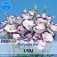 ไม้ตัดดอก ลิซิแอนธัส เจม (Gem Series) 1.63-2.14-บาท/เมล็ด