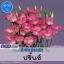 ไม้ตัดดอก ลิซิแอนธัส ปริ้นซ์ (Prince Series) 2.14 -1.63 บาท/เมล็ด