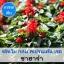 ซัลเวีย กลุ่ม สเปรนเด้น เรด สายพันธุ์ ซาฮาร่า (Splenden Red - Sahara) 0.9 - 1.5 บาท/เมล็ด
