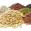 อาหารพื้นบ้านๆ จากตลาดสด แบบไหน ที่เหมาะสมกับกุ้งของเราบ้างหนา ?