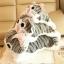 ตุ๊กตาแมวจี้ขอแท้ วัดจากหัว-หาง45cm ไซส์L thumbnail 1