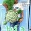 ตุ๊กตาเต่าแซมมี่ ไซส์8 วัดจากจมูก-หาง80cm งานนำเข้า เนื้อผ้าเกรดA คุณภาพดี ขนนุ่มมาก thumbnail 2