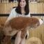 ตุ๊กตาหมีขั้วโลก รุ่นใยนิ่ม ขนาดวัดจากจมูก-ขาหลัง100cm thumbnail 2