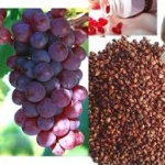 เกรปซีด Grape Seed Extract สารสกัดจากเมล็ดองุ่น คืออะไร ประโยชน์ สรรพคุณอย่างไร ยี่ห้อไหนดี