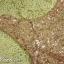 พร้อมส่ง ชุดราตรีสั้น แขนกุด สี Nude แต่งเลื่อมสีชมพู กระโปรงผ้าชีฟอง (เหลือเฉพาะไซส์ XL ) thumbnail 4