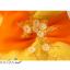 พร้อมเช่า ชุดแฟนซี ชุดราตรี ไหล่เดียว สีส้มแต่งระบายสีเหลือง น่ารัก แต่งโบว์เพิ่มความหวาน thumbnail 8