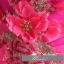 พร้อมเช่า ชุดแฟนซี ชุดราตรี เกาะอก สีชมพู Hot pink แต่งช่อดอกไม้ช่วงหน้าอก thumbnail 7