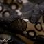 พร้อมส่ง ชุดเดรสแขนสั้น เข้ารูป สีดำ ผ้าชีฟอง กระโปรงลูกไม้ (แถมเข็มขัด) thumbnail 8
