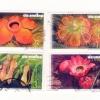 สัปดาห์สากลแห่งการเขียนจดหมาย 2549 ชุด ต้นไม้กับดักแมลง (ใช้แล้ว)