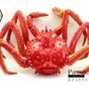 โมเดลปูอะลาสก้า Alaska Crab ตั้งโชว์สวย ขนาดใหญ่ 14 นิ้ว