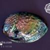 เปลือกหอยเป๋าฮื้อแท้ (Abalone) ขัด สีปีกแมลงทับ ขนาดใหญ่ สำหรับตกแต่งและงานฝีมือ HA002