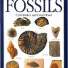 หนังสือคู่มือฟอสซิลของ Smithsonian Handbooks: Fossils (หนังสือใหม่ มือ 1)