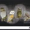 แผ่นชีทแสตมป์ชุด นกกลางคืน นกฮูก นกเค้าแมว ปี 2556 (ยังไม่ใช้)