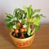 C005-สวนต้นไม้มงคล ไซร์ 3 นิ้ว กล้วย มะยม ส้ม ขนุน