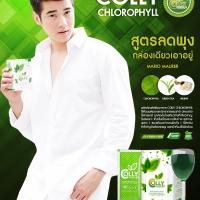 คอลลี่ คลอโรฟิลล์ ลดพุง COLLY Chlorophyll Plus Fiber