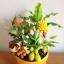 C012-สวนต้นไม้มงคล ทับทิม มะยม ส้ม กล้วย ขนุน_ไซร์ 3-6 นิ้ว thumbnail 1