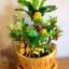C014-สวนต้นไม้มงคล ส้ม มะยม กล้วย ขนุน 3-12 นิ้ว thumbnail 2