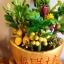 C014-สวนต้นไม้มงคล ส้ม มะยม กล้วย ขนุน 3-12 นิ้ว thumbnail 6