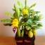 C018-สวนขนุน ต้นกล้วย ไซร์ 6-9 นิ้ว thumbnail 3