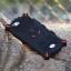 เคส Oppo Joy 5 / Oppo Neo 5S ซิลิโคน TPU ดีเซฟติคอน สุดเท่ ราคาส่ง ราคาถูก thumbnail 1