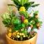 C014-สวนต้นไม้มงคล ส้ม มะยม กล้วย ขนุน 3-12 นิ้ว thumbnail 4