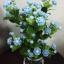 J005-ต้นดอกมะลิ ความสูงรวมกระถาง 18 นิ้ว thumbnail 4