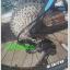 จักรยานเสือภูเขา FORMAT DES90 เฟรมอลู U6 ,11 สปีด ล้อแบร์ริ่ง 27.5 2017 thumbnail 11